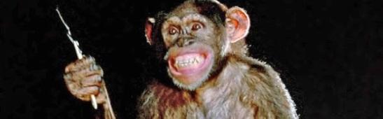 chimp-phenomena-600x300